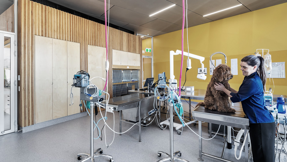 Veterinary treatment room